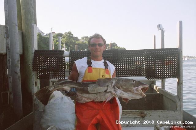 a nice codfish