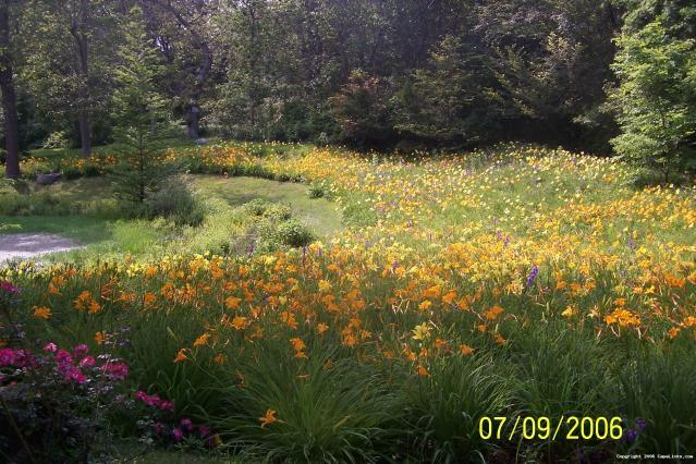 Falmouth garden