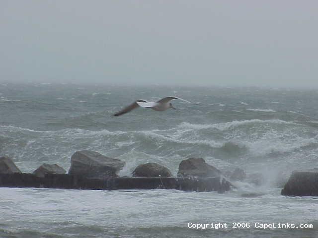 seagull navigates a storm